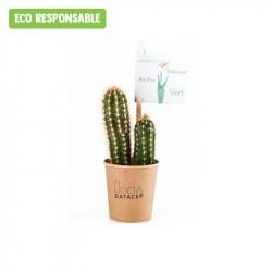 Cactus publicitaire