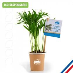 Plante dépolluante perosnnalisée